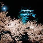 桜開花情報(その1)